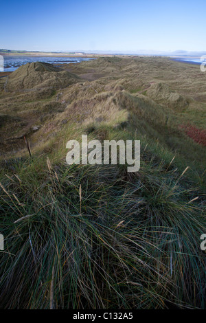 Sand Dunes and Marram Grass, on Holy Island NNR, view northwards, autumn, Northumberland, England - Stock Photo