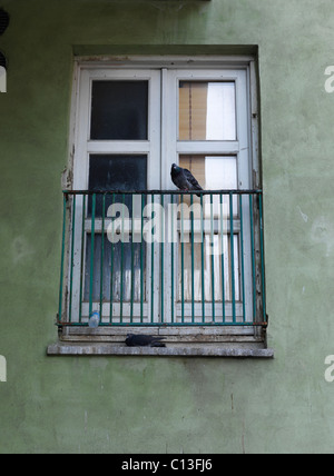 pigeon perched on house balcony in the city of Copenhagen Denmark - Stock Photo