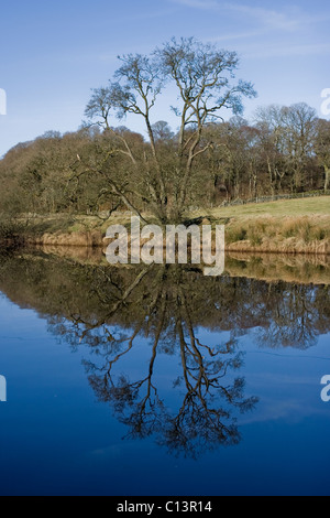 Alder tree reflected in the River Cree - Stock Photo