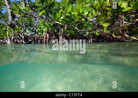 Split-view of a mangrove forest - Stock Photo