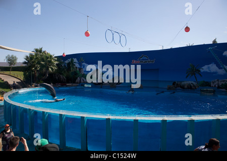 Zoo Marine in Albufeira Portugal dolphin show - Stock Photo