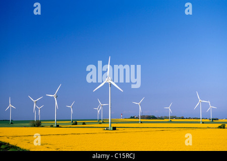 Rapeseed field with wind turbines in Fehmarn, Schleswig-Holstein, Germany, Europe - Stock Photo