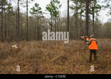 Upland Bird Hunters and and Bird Dogs during a Bobwhite Quail Hunt in the Piney Woods of Dougherty County, Georgia - Stock Photo