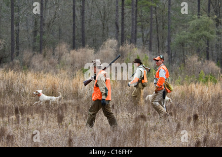 Upland Bird Hunters, Guide and English Setter during a Bobwhite Quail Hunt in the Piney Woods of Dougherty County, - Stock Photo
