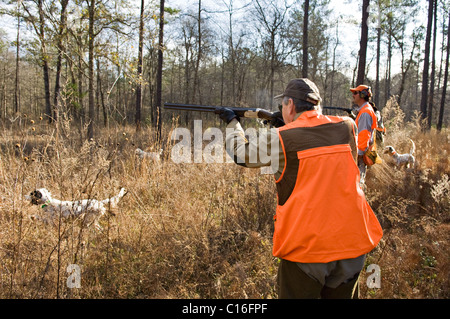 Upland Bird Hunters, Guide and English Setters during a Bobwhite Quail Hunt in the Piney Woods of Dougherty County, - Stock Photo