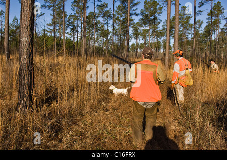 Upland Bird Hunters, Guide and English Setter on Point during a Bobwhite Quail Hunt in the Piney Woods of Georgia - Stock Photo