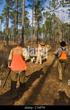 Upland Bird Hunters, Guide, English Cocker Spaniel and English Setter during a Bobwhite Quail Hunt in the Piney - Stock Photo