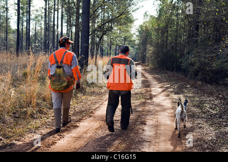Upland Bird Hunter and Guide Walking Down Dirt Road during a Bobwhite Quail Hunt in the Piney Woods of Dougherty - Stock Photo