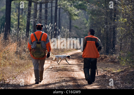 Upland Bird Hunter and Guide Walk Down Dirt Road as Setter Runs Ahead during a Bobwhite Quail Hunt in the Piney - Stock Photo