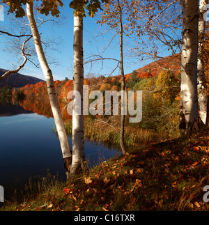 Autumnal coloured leaves at a lake, Indian summer, New England, USA - Stock Photo