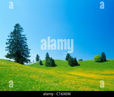 Landscape near Fuessen, spring, east Allgaeu, Bavaria, Germany, Europe - Stock Photo