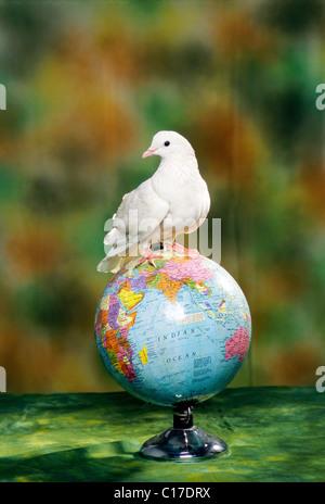 RMM-60207 : Concepts pigeon sitting on globe - Stock Photo