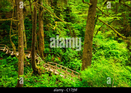 Wooden path through temperate rain forest. Pacific Rim National Park, British Columbia Canada - Stock Photo