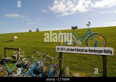 Cyclists and sheep on a dike near Hamburg Hallig, North Frisia, North Sea, Schleswig-Holstein, Germany, Europe - Stock Photo