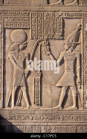 Egypt, Kom Ombo temple (walls details) located between Assouan and Luxor - Stock Photo