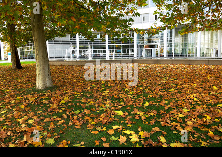 Autumn leaves on front of the Siemens building, St.-Martin-Strasse, Munich, Bavaria, Germany, Europe - Stock Photo