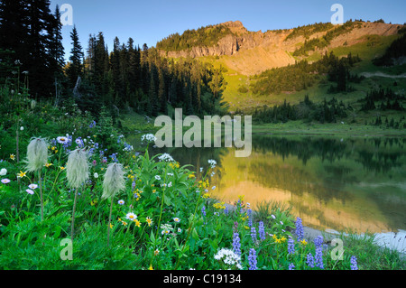 Wild flowers on the bank of Tipsoo Lake in Chinook Pass, Mount Rainier National Park, Washington, USA - Stock Photo
