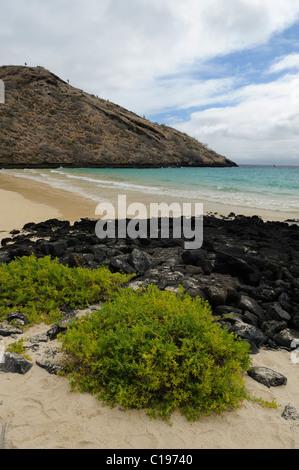 White sandy beach on the eastern side of Punta Cormoran, where Green Sea Turtles prefer to nest, Floreana Island, - Stock Photo