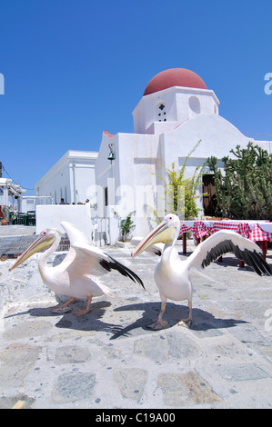 Two pelicans at the main square in front of a Greek domed church with a red roof, tourist attraction in Mykonos - Stock Photo