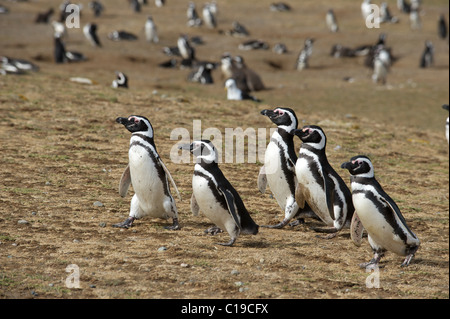 A group of dressed in tuxedo gentlemen marching on a beach - Stock Photo