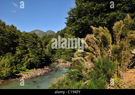 Blue sky Andean view of opaque milky water of Rio Frias flowing through forest trees with bamboo, Puerto Blest, - Stock Photo