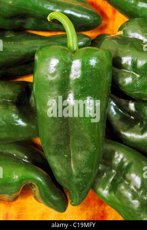 Poblano chili peppers chile Capsicum annuum - Stock Photo