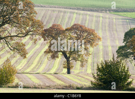 Mature Oak tree elegantly positioned in a field of freshly cut barley early autumn time - Stock Photo