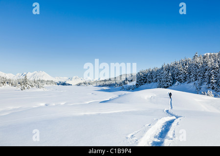 A male hiker on snowshoes on a trail in Alaska near snow-covered spruce trees and mountains in background. - Stock Photo