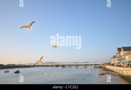 Seagulls flying above the river Adur, Shoreham, East Sussex, England - Stock Photo