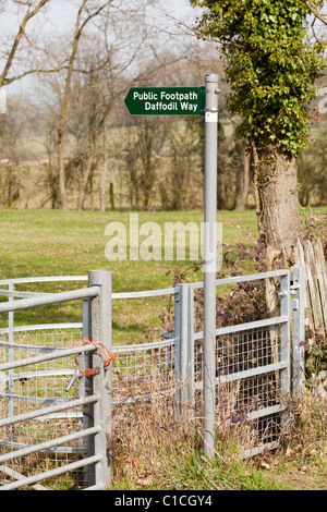 Public footpath sign for the Daffodil Way, a circular walk near Dymock in northwest Gloucestershire visiting wild - Stock Photo