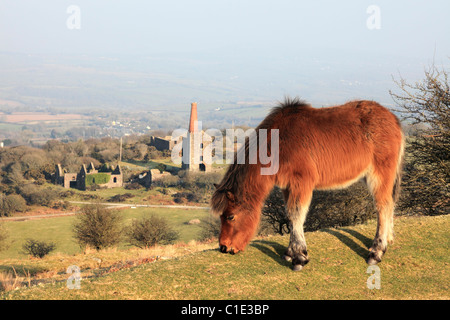 A Pony near Minions on Bodmin Moor with Phoenix United mine in the background - Stock Photo