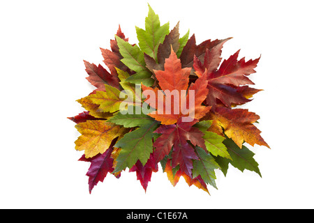 Maple Leaves Mixed Fall Colors Autumn Wreath on White Background - Stock Photo