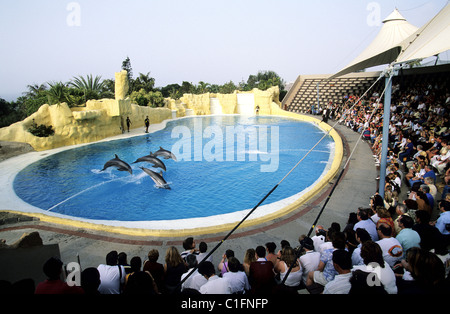 Spain, Canary Islands, Tenerife, Loro parque in Puerto of Cruz, aquatic show with dolphins - Stock Photo