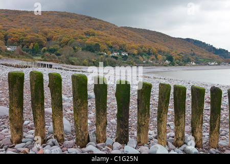 Wooden groynes on Porlock Beach, looking towards Worthy Wood above Porlock Weir, Exmoor National Park, Somerset, - Stock Photo