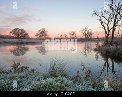 Trees beside a still fishing lake on a frosty morning, Morchard Road, Devon, England. Winter (November) 2010. - Stock Photo