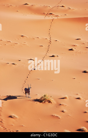Gemsbok (Oryx gazella) In typical desert habitat Namibian desert - Stock Photo