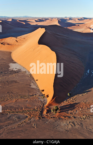 Sand dune can reach up to 400 meters in height. Sossusvlei in the Namib desert. Namib-Naukluft. N.P, Namibia. - Stock Photo
