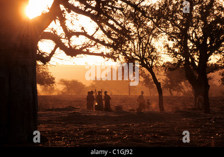 Mali, Dogon country, the early morning in the village of Teli at the bottom of the Bandiagara cliff - Stock Photo