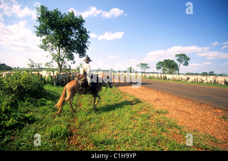 Brazil, state of Mato Grosso do Sul, Pantanal- cows and cow-boy along the Transpantanal road - Stock Photo