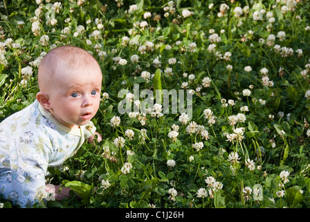 Baby Boy Sitting in a Field of Green Clover with White Flowers from Above - Stock Photo