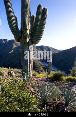 Looking down past saguaro cactus and other desert flora to the Salt river in Arizona - Stock Photo