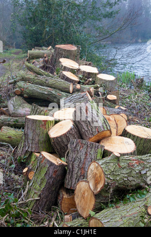 Woodland management, log pile left as part of conservation policy, Kent, UK - Stock Photo