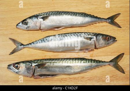 Three Mackerel fish on a wooden board - Stock Photo