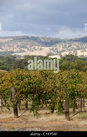 Vines in the Barossa wine growing region, South Australia. - Stock Photo