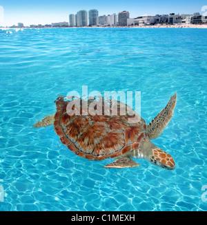 Green sea Turtle Caribbean sea surface Cancun Mexico Chelonia mydas - Stock Photo