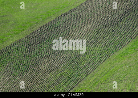 Aerial view of sprouts of grain in an open field - Stock Photo