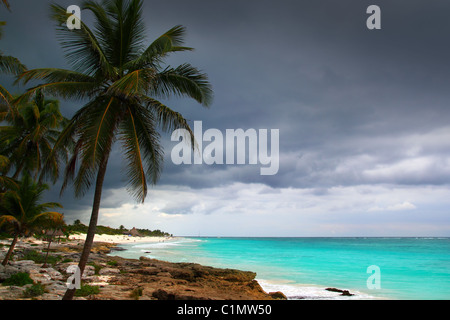 Caribbean stormy day palm trees in Tulum Mexico Quintana Roo - Stock Photo
