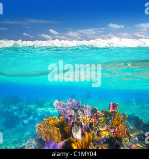 Mayan Riviera coral reef underwater up down waterline Mexico - Stock Photo