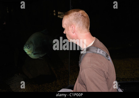 Man visiting aquarium and looking at big fish - Stock Photo