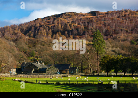 Farm in Lake District National Park, Nether End, Yewdale, Cumbria, England, Europe - Stock Photo